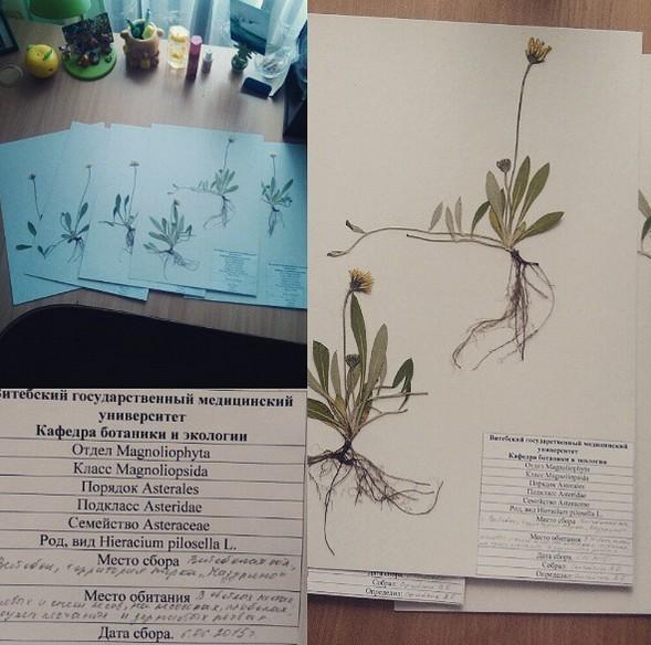 фармацевтический факультет вгму бгму медпред